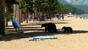 Семейство мечки се охлажда в езерото Тахо, Калифорния