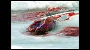 Помогнете На Беззащтитните Тюлени