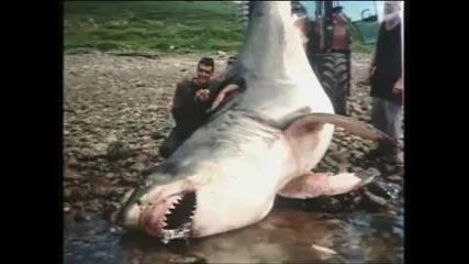 Чудовищна акула