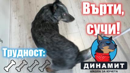 Лесен кучешки трик -- научете го да се върти!