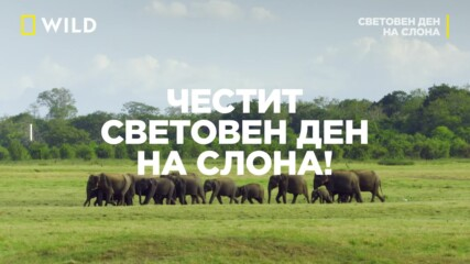Световен ден на слона | 12 август