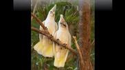 Песента на птиците и неповторимата Yma Sumac