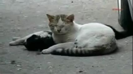 Котка се опитва да съживи мъртъвият си приятел, след като е ударен от кола!!!