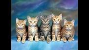 Вечен - Чело Коте !!!!