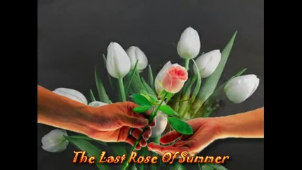 Andre Rieu - The Last Rose Of Summer - Romance For You Ii