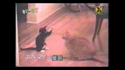 Луда Котка