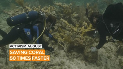 Activism August: Two friends are changing the game for coral reefs