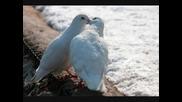 Два гълъба - анс. Филип Кутев