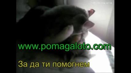 Помагало за всеки ученик и студент - www.pomagaloto.com