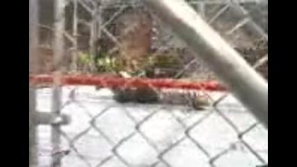 Джеф Харди не оцелва с бомбата на лебеда от върха на клетка !