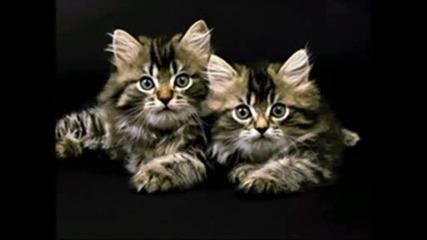 Животни - Pussycat Dolls