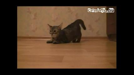 Котка спринтьор
