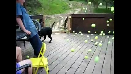 И кучето не разбра какво става!!! (смях)