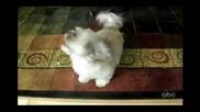 Најчудното лаење на куче што сте го слушнале
