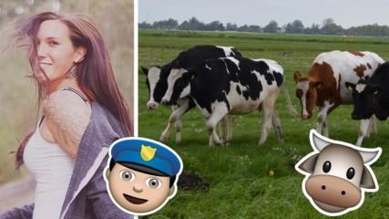 КУРИОЗ! Крави спипаха крадла, полицията не успя сама!
