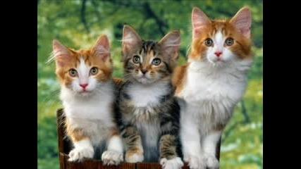 Най - Сладките Животни