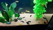 Моят аквариум