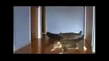 Дрифт с котки ;дд