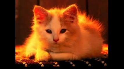 Сладки Котета