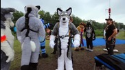 Fursuit Bungee Weekend - 2014