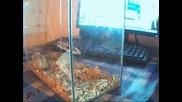 princeskata mi Изи ( hugg ) (mini hamsterchee ) ) 0t my pile (h)