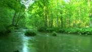 Звуците на природата ... ...