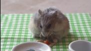 хамстер яде една малка пица