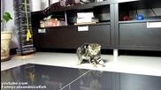Котките Нинджа