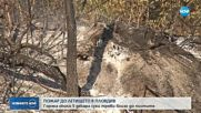 Голям пожар избухна в района на Летище Пловдив