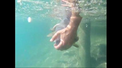 Уважавайте природата - catch and release !!!!