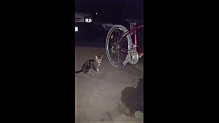 Сладко коте си играе с колело!