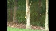 Игривата катерица