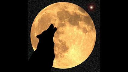 Вълк...