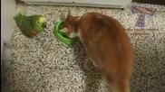 Компилация - кучета и котки си играят с птици