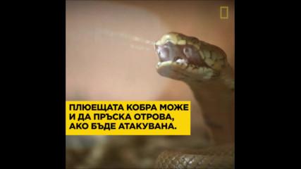 Световен ден на змията - 16ти юли