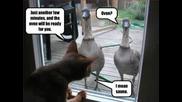 Смешни снимки на котки !