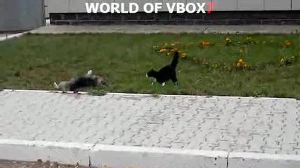 Котка напада куче ( Яко Смях )