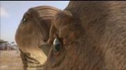 Bbc Планетата на динозаврите 4 епизод - 1/2