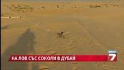 На лов със соколи в Дубай