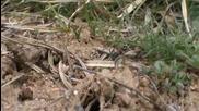 Мравките и техният живот