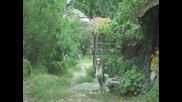 Куче играе Лякокарача - Българско