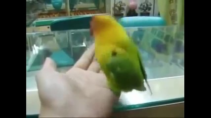 Папагалът който гледал порно