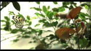 Latifa - Ya Hayati [official Video] - لطيفة - يا حياتي أنا جانبك