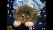 Малко Сладко Котенце