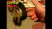 Застреляната Котка