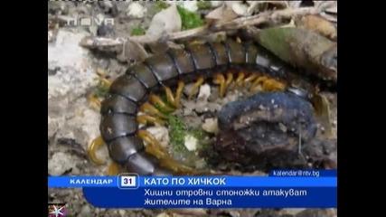 Варна, отровни стоножки атакуват