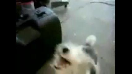 Откачено куче металист