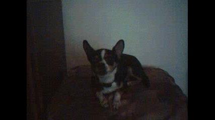 Кучето Чочко