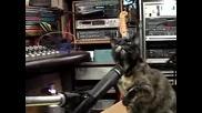 Котки Пеят Коледна Песен