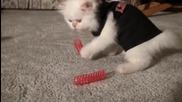 Много сладко котенце